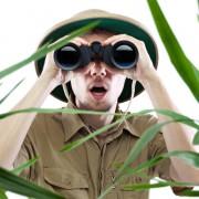 website content jungle