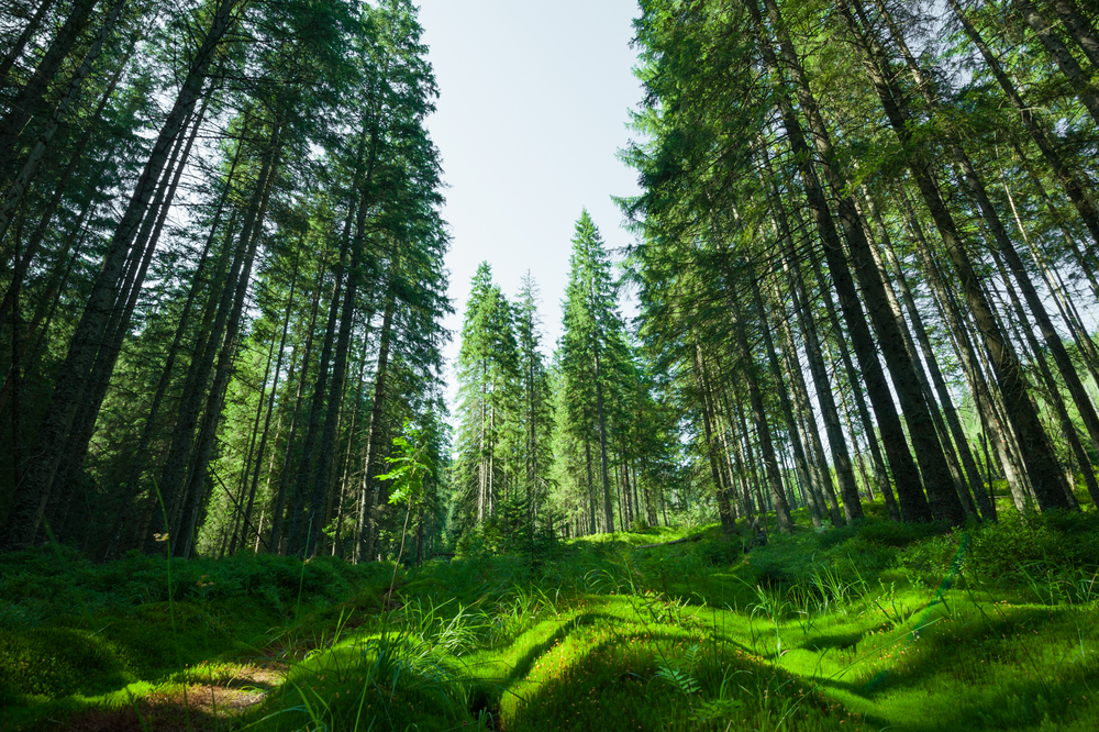 How To Enhance Your Digital Marketing With Evergreen Content