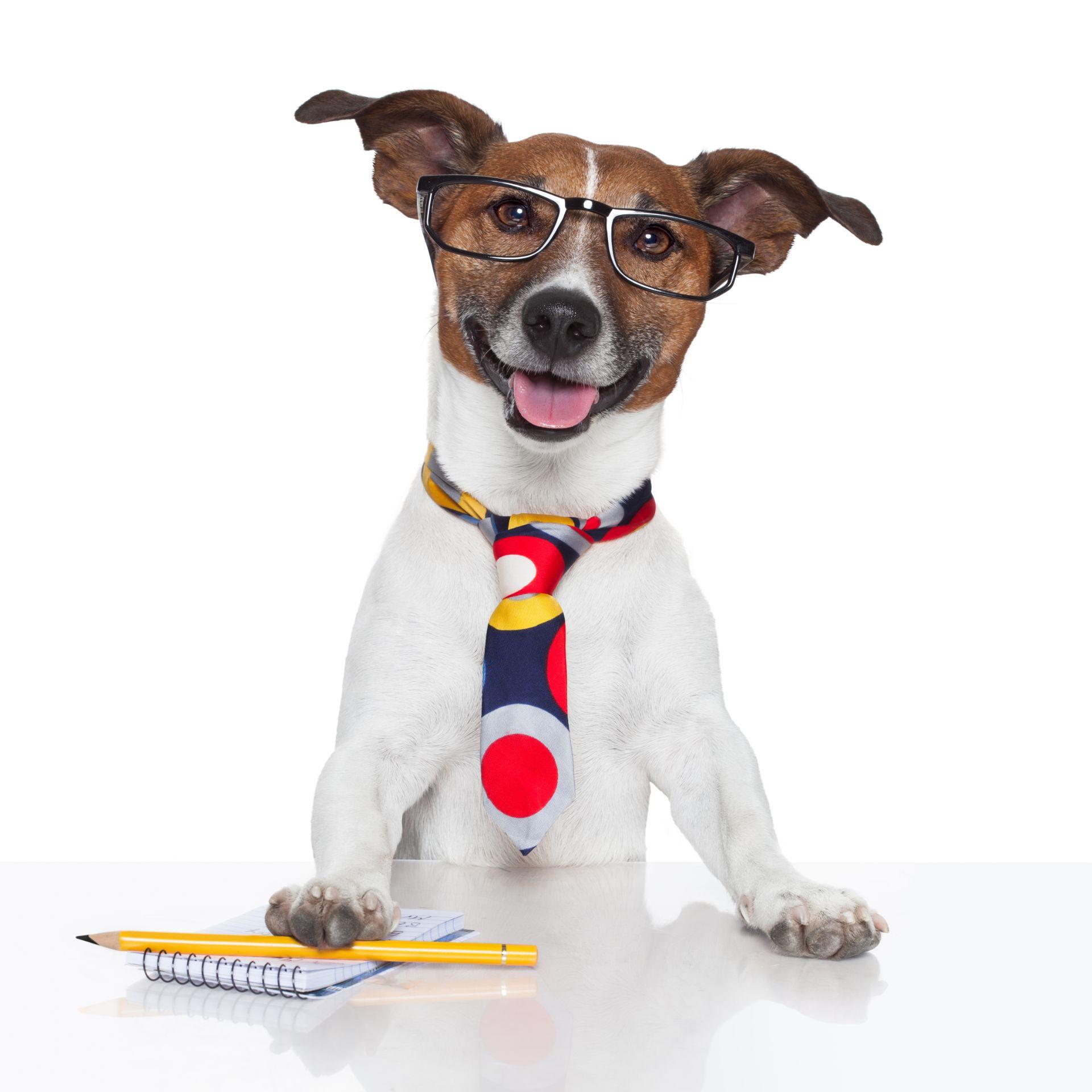 Trained Dog Happy Dog