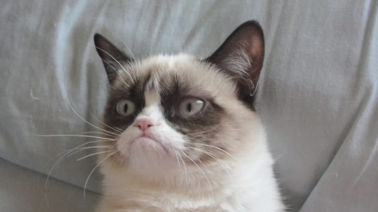How Grumpy Cat Is Purrfect At Copywriting - Express Writers