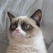 grumpy cat copywriting