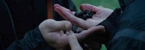 Hunger Games berries