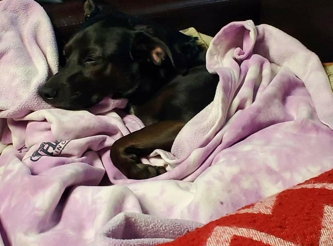 Cassie's dog Abby