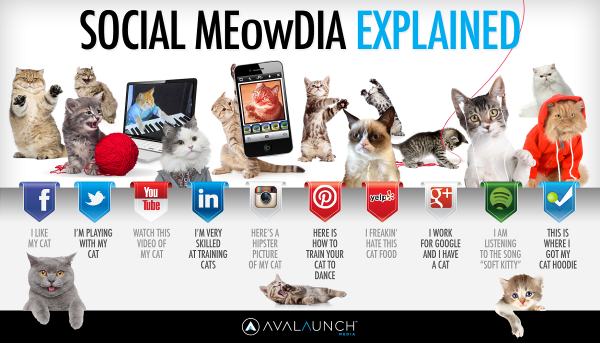 social-media-explained-cats-600x343